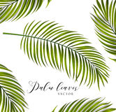 Vector palm leaves vector illustration