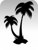 Vector palm tree Stock Images