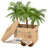 Vector Palm Tree in Box isolated on white background Stock Images