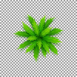 Vector palm tree isolated on transparent backdrop Royalty Free Stock Photos