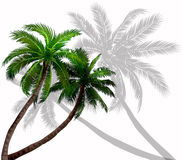 Vector palm trees with green leaves Royalty Free Stock Image