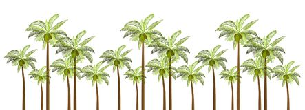 Vector Palm trees illustration for your business. Vector Palm trees illustration for your business Stock Images