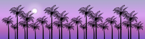 Vector Palm trees illustration for your business. Evening landscape of palm trees Royalty Free Stock Image