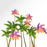 Vector palm trees. Royalty Free Stock Photo