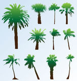 Vector palm trees set. Collection of vector palm trees silhouettes. Easy to edit, any size Stock Photography