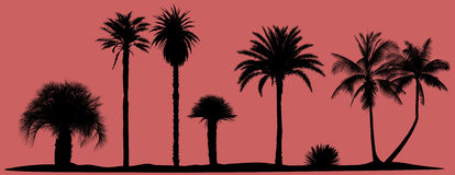 Vector palm trees silhouettes Royalty Free Stock Images