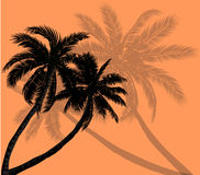 Vector palm trees with silhouettes of leaves Royalty Free Stock Images