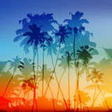 Vector palms silhouettes tropical sunset Royalty Free Stock Photo