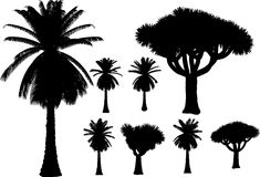 Vector palms and trees Royalty Free Stock Image