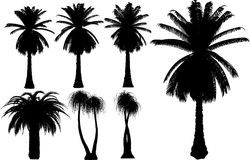 Vector palms and trees Stock Photos