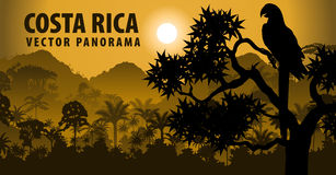 Vector panorama of Costa rica with jungle raimforest withara makaw parrot. Illustration Royalty Free Stock Photo