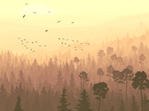 Wild birds in coniferous wood in morning fog. Stock Images