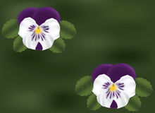 Vector Pansy Royalty Free Stock Images