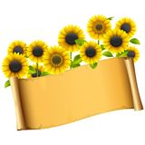 Vector Paper Placard with Sunflowers royalty free illustration