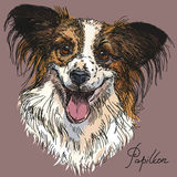 Vector Papillon in color Royalty Free Stock Image