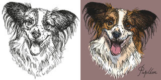Vector Papillon dog in black and white and colorful Royalty Free Stock Photography
