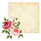 Vector parchment card with red and pink roses. Royalty Free Stock Photo