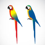 Vector of a parrot Macaws on white background. Royalty Free Stock Image