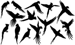 Vector parrot silhouettes on white royalty free illustration