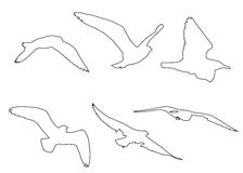 Vector paths of Seagull set. On the white background Royalty Free Stock Photos