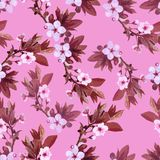 Vector pattern apricot flowers Royalty Free Stock Photography