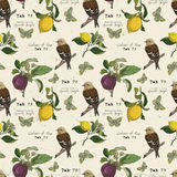 Vector pattern with bird and fruits Royalty Free Stock Photography