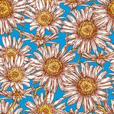 Seamless background of the flowering camomiles. Vector pattern of the blossoming chamomiles Stock Images