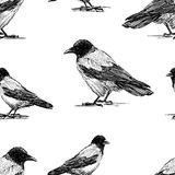 Seamless background of crows sketches. Vector pattern of the drawn crows Vector Illustration