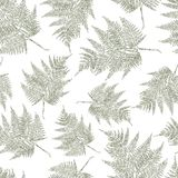 Seamless background of a the fern leaves. Vector pattern of the drawn fern leaves Stock Photography