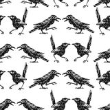 Seamless background of the sketches of crows and magpies. Vector pattern of the drawn wild birds Royalty Free Stock Photography