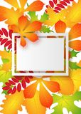 Vector, pattern, frame with autumn leaves Royalty Free Stock Photography