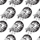 Vector pattern with  hand drawn illustration of shellfish nautilus Stock Photography