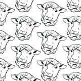 Vector pattern with hand drawn sheeps. Stock Photos