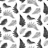 Vector pattern illustration of fern leaf. Vector botanical illustration of fern leaf. Isolated outline modern drawing of tropical plant. Set of exotic fern Stock Image