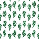 Vector pattern illustration of fern leaf. Vector botanical illustration of fern leaf. Isolated outline modern drawing of tropical plant. Set of exotic fern Stock Photo