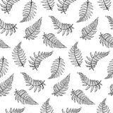Vector pattern illustration of fern leaf. Vector botanical illustration of fern leaf. Isolated outline modern drawing of tropical plant. Set of exotic fern Royalty Free Stock Photo