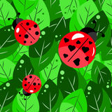 Vector pattern leaves and ladybugs Royalty Free Stock Photo