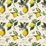 Vector pattern with lemon branches and butterfly. Stock Photos