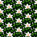 Vector pattern with lily flowers. Floral seamless vector pattern with classic Japanese motifs and lily flowers in white color on dark black background Royalty Free Stock Photography