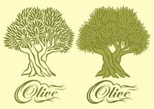 Vector pattern with olive tree for packaging Royalty Free Stock Image