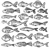 Vector pattern with print of fish. On white background stock illustration