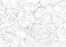Vector pattern with seamless roses on white background Stock Photography