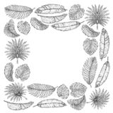 Vector pattern with tropical leaves. Palm tree. Philodendron. Cute vintage garden.