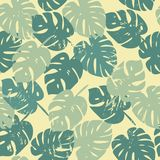 Vector pattern with tropical leaves Stock Photos