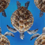 Vector pattern of turtle on a blue background Stock Photos