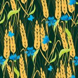 Background of cornflowers and ripe wheat. Vector pattern of the wheat and flowers Royalty Free Stock Photography