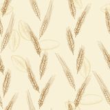 Vector pattern with wheat spikelets Stock Images