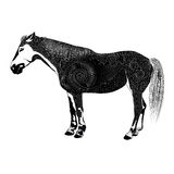 Vector patterned horse.  black and white illustration Royalty Free Stock Image