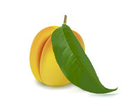 Vector. Peach with a leaf Royalty Free Stock Photos