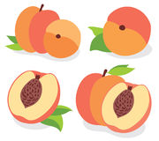 Vector peaches Stock Image